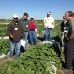 Vegetable growers taking a look at new Seminis vegetable varieties.