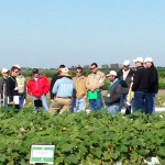 Vegetable growers out at Seminis research facility.